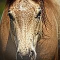 Buckskin Stallion by Maggy Marsh