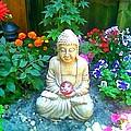 Backyard Buddha by Steed Edwards