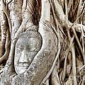 Buddha Head In Tree Wat Mahathat Ayutthaya  Thailand by Fototrav Print
