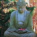 Buddha  by Vijay Sharon Govender
