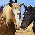 Buddies Wild Mustangs by Rich Franco