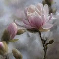Budding Magnolia Branch by Karen Forsyth