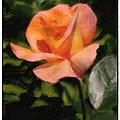 Budding Rose by Susan  Lipschutz