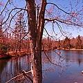 Budding Spring Tree by John Malone