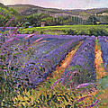 Buddleia And Lavender Field Montclus by Timothy Easton