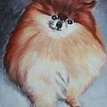 Buddy - Pomeranian by Wendy Whiteside