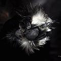 Buddys Fluffy Paw by Paulette B Wright