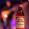 Budweiser Blues by Semmick Photo