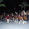 Budwiser Clidsdale Horses by Robert Floyd