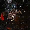 Bufa Toad by Robert Floyd