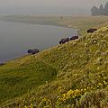 Buffalo   #0237 by J L Woody Wooden