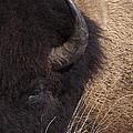 Buffalo   #0921 by J L Woody Wooden