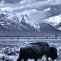 Buffalo And Mountain In Jackson Hole by Dan Sproul