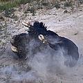 Buffalo Bath   #7218 by J L Woody Wooden