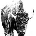 Buffalo Gal Too by Barbara Henry