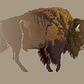 Buffalo. Hand-drawn Illustration by Imagewriter