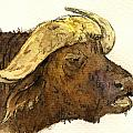 Buffalo head by Juan  Bosco