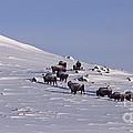 Buffalo Herd In Snow   #6075 by J L Woody Wooden