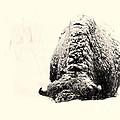 Buffalo Hump by Jim Garrison