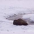 Buffalo In Snow   #6143 by J L Woody Wooden
