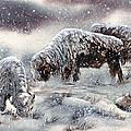 Buffalo In Snow by Jill Westbrook