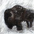 Buffalo In The Snow by Barbie Batson