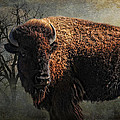 Buffalo Moon by Karen Slagle
