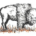 Buffalo by Peter Rashford