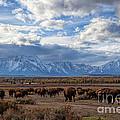 Buffalo Run by Jim Garrison