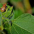Bug On Leaf by David Sanchez