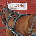 Buggy Attached by Ann Horn