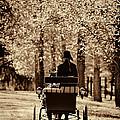 Buggy Ride by Joan Davis