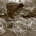 Buggy Sepia by Dwight Cook