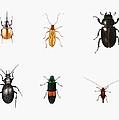Bugs by Ele Grafton