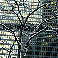 Building Reflection And Tree by Rick Shea