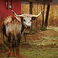 Bull by Dan Young
