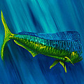 Bull Dolphin by Steve Ozment