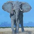 Bull Elephant by Robert Teeling