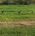 Bull Elk At Dean Creek by Mick Anderson