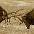 Bull Elk In The Rut   #8924 by J L Woody Wooden