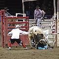 Bull Fighter Rescue by John Pratt
