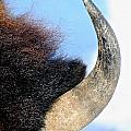 Bull Horn by Susan Herber