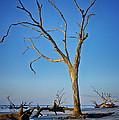 Bull Island South Carolina by Carrie Cranwill