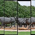 Bull Market Quadriptych by Christine Till