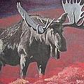 Bull Moose by Denis Gloudeman
