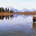 Bull Moose Grand Teton National Park Wy by Panoramic Images