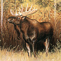Bull Moose by Karen Cade