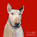 Bull Terrier On Red by Dale Moses