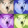 Bull Terrier Pop Art by George Pedro