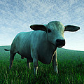 Bull... by Tim Fillingim